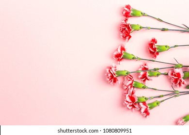 Pink background with carnations flowers and copy space. Top view. Mother's Day  background.