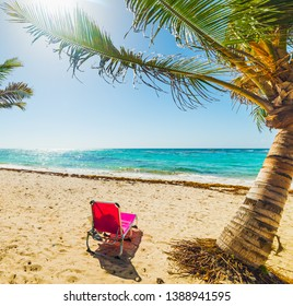 Pink beach chair under palm trees in Raisins Clairs beach in Guadeloupe, French west indies. Lesser Antilles, Caribbean sea