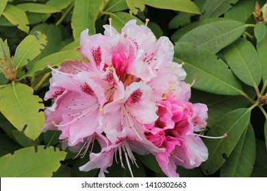 pink beautiful flower with leaves as background