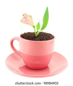 Pink beautiful fresh flower growing in a coffee mug.