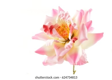 pink beautiful rose flower on white background