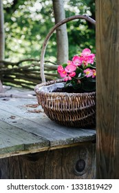 pink begonias in a wickery basket on wooden table - garden decoration