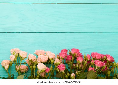 Pink and beige roses on blue wooden background