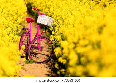 pink bike with white basket standing in the field of yellow rape