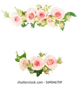Pink blooming fresh roses frame borders isolated on white background