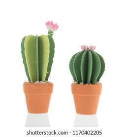 Pink blooming wooden cacti in pot isolated over white background