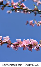 Pink blossom against the background of the sky.