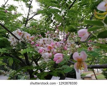 pink blossom seasonal summer