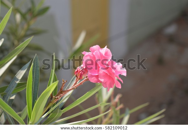 Pink blossoming flower during day time captured in perfect ambient light