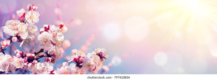 Pink Blossoms Against Sky At Sunrise - Spring Blooming - Contain Illustration