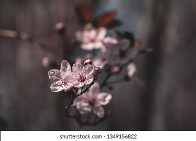 Pink blossoms in a dark background mode
