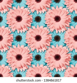 Pink and blue Chamomile or gerbera seamless floral pattern. Summer flowers