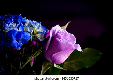 Pink and blue flowers on a dark background