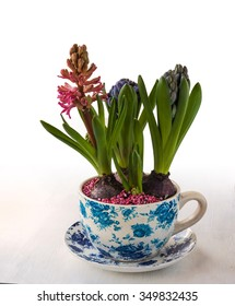 Pink and blue hyacinths in a pot with a vintage patter on a white background