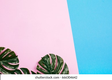 Pink and blue pastel background with tropical leaves, flat lay.