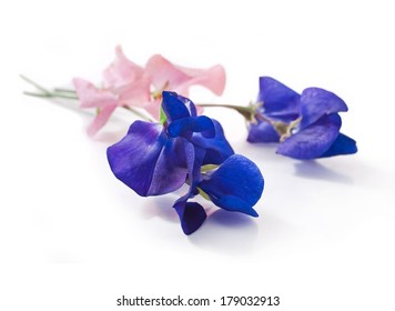 Pink and blue sweet pea flowers isolated on white background