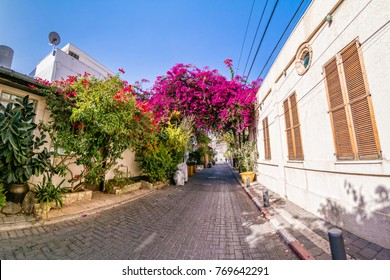 Pink bougainvillea flowers in historic Neve Tzedek district, Tel Aviv, Israel.