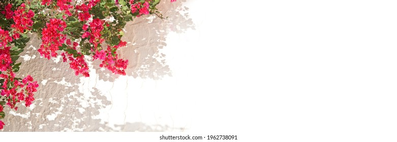 Pink bougainvillea on a white wall with copyspace, mediterranean spring and summer panoramic background - Shutterstock ID 1962738091