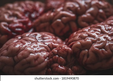 Pink brain before cooking on a plate of dark glass stands on a wooden table. Raw fresh brain of a mammalian animal, a cow. Raw meat. Gut.
