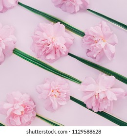 Pink buds of roses and green oblong leaves on a pink background.