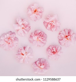 Pink buds of roses on pale pink background. Top view.