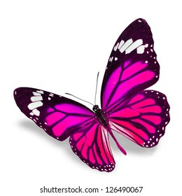 Pink Butterfly flying  isolated on white background, Soft shadow underneath.