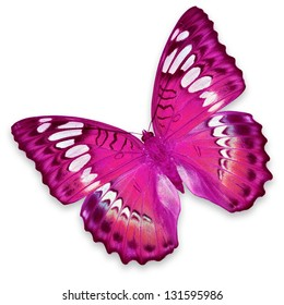 Pink butterfly isolated on white background