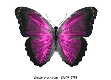 pink butterfly. natural insect. isolated on white background