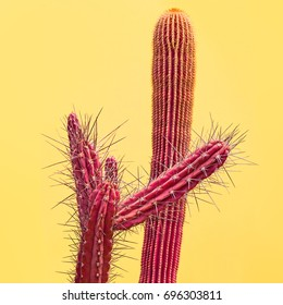Pink Cactus Set. Art Gallery Fashion Design. Minimal Summer Stillife. Concept on Yellow background