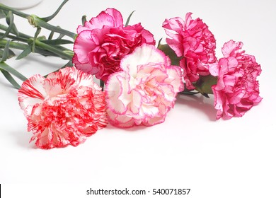 pink carnation,  bouquet