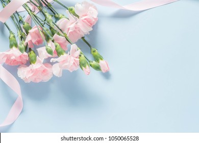 Pink carnation with light blue background