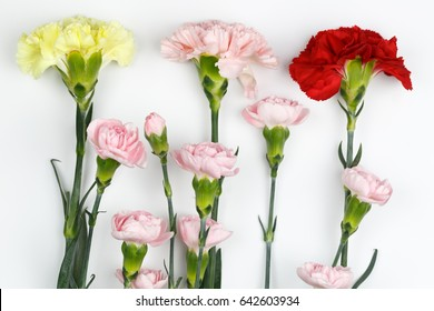Pink Carnation, Red Carnation, Yellow Carnation Mix Spray Carnations on white background with copy space
