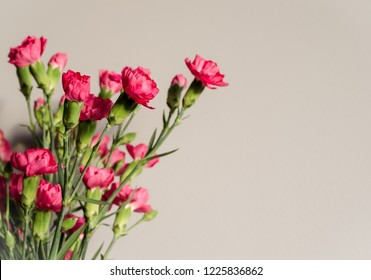 Pink Carnations with buds Card. Close up. Copy space for text.