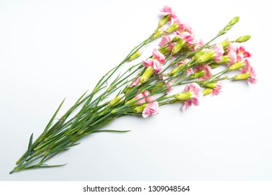 pink carnations flower for on white background