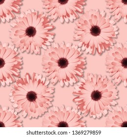 Pink Chamomile or gerbera seamless floral pattern. Summer flowers