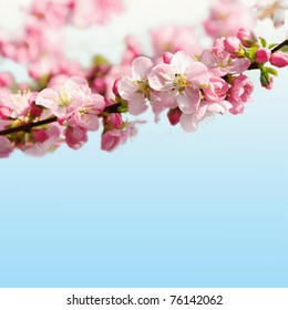Pink Cherry Blossom Floral Border shallow DOF