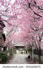 Pink cherry blossom tree near a building English translation : Temple Entrance