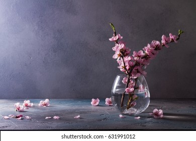 pink cherry blossom twigs in vase on gray background with copy space