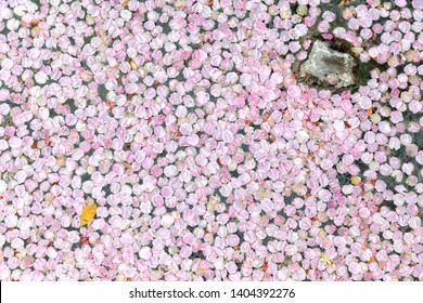 Pink Cherry Trees Petals Floating Background with Yellow Leaf and Rock.