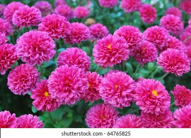 Hardy Perennials Images Stock Photos Vectors Shutterstock
