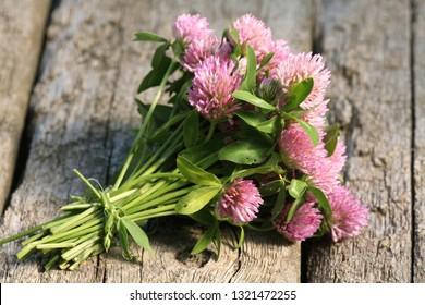 Pink clover flowers bouquet