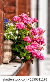 Pink color flower basket box decoration on summer day with brick architecture in Chelsea, London UK window