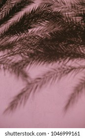 pink color wall with palm leaves tree shadows pink background tropical summer design