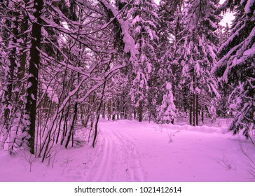 Pink colored winter forest