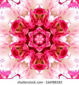 Pink Concentric Flower Center Macro Close-up. Mandala Kaleidoscopic design