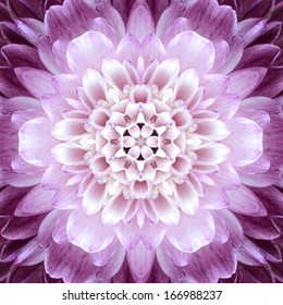 Pink Concentric Flower Center Macro Close-up. Mandala Kaleidoscopic design