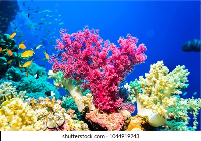 underwater images stock photos vectors shutterstock