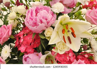Pink and cream floral blooms