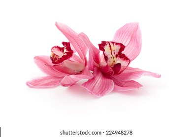 Pink Cymbidium orchids isolated on white.