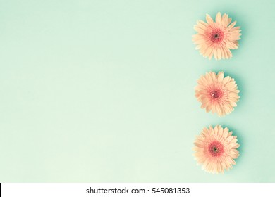 Pink daisies over mint background